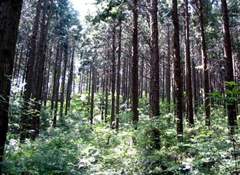 間伐により健全で元気な森林を育成